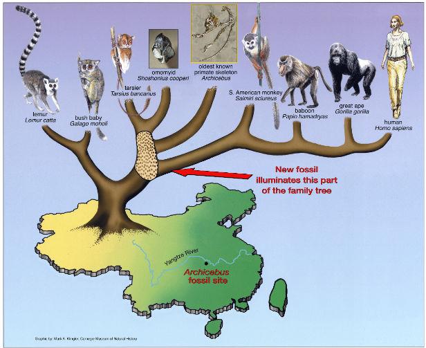 viziunea primatelor