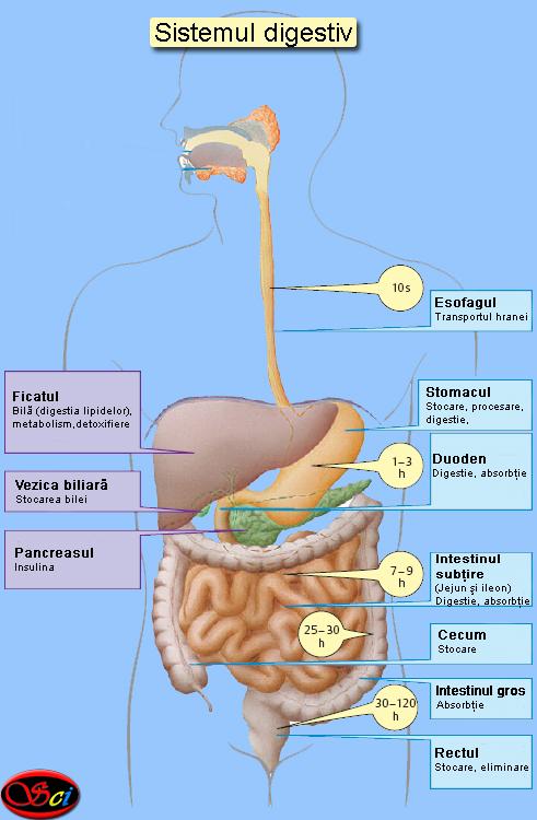 ce inseamna digestie