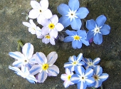 Florile lui Mendel si legile ereditatii