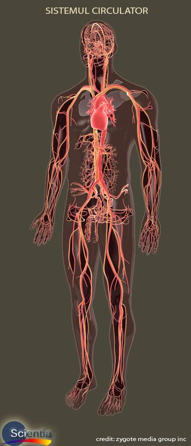 cum arata venele tratamentul varicității varicoase